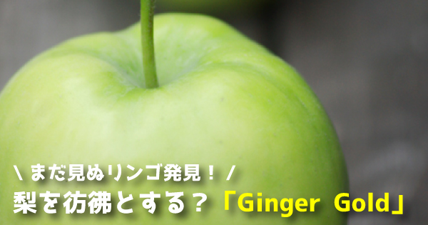 gingergold111