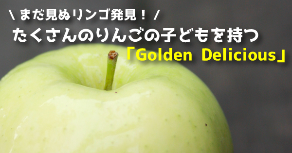 goldendelicious