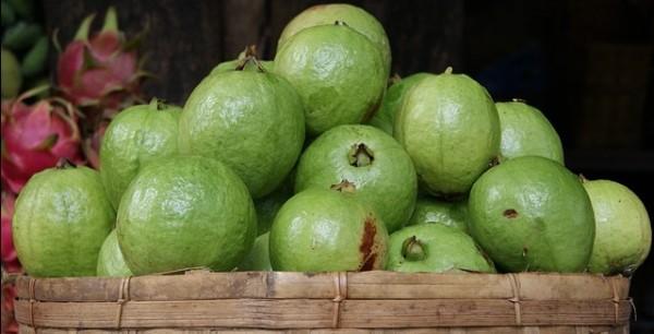guava-1796858_640