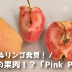 【果肉が桃色の珍品種?】ピンクパールりんご(pink pearl)まとめ
