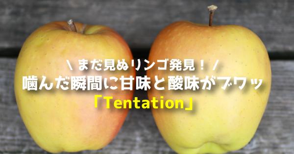 tentationannn11