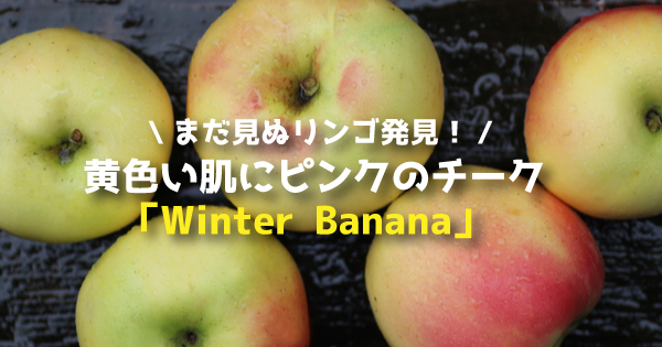 winterbanana