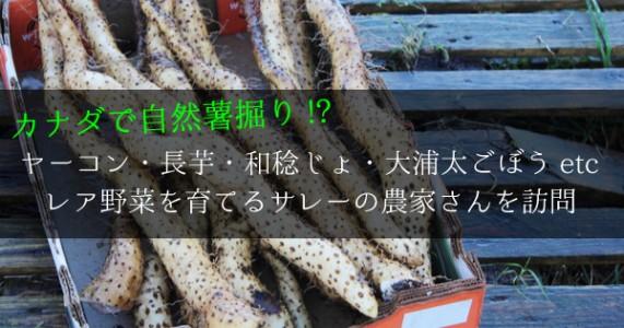 カナダで自然薯掘り!? ヤーコン・長芋・大浦太ごぼう農家さんを訪問!