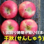 出回り時期が短い秋田のりんご!千秋(せんしゅう)まとめ