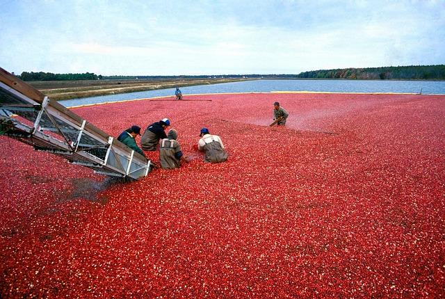 cranberry-387284_640