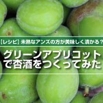 未熟なアンズの方が美味しく漬かる?!グリーンアプリコットの杏酒レシピ