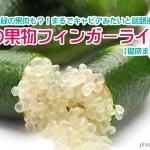 【徹底まとめ】まるでキャビアと話題沸騰!幻の果物フィンガーライム(Finger Lime)