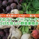 タイベリーも発見!カナダのファーマーズマーケットで見つけた珍しい野菜果物8つ