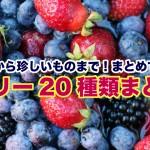 berrymatome