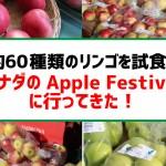 約60種類のリンゴを試食!バンクーバーのApple Festivalの魅力5つ