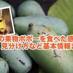 【保存版】バナナ+マンゴー?幻の果物ポポー(Pawpaw)を食べてみた感想+歴史・栄養・見分け方