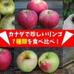 カナダで珍しいリンゴ7種類を食べ比べ(Macoun / Golden Russet / Arlet / Tolman Sweet / Old Pearmain / Lindle / Arkansas Red)