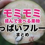 【保存版】揉んで食べるおっぱいフルーツ!スターアップル(ミルクフルーツ)まとめ