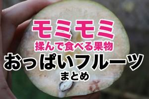 oppaifruit