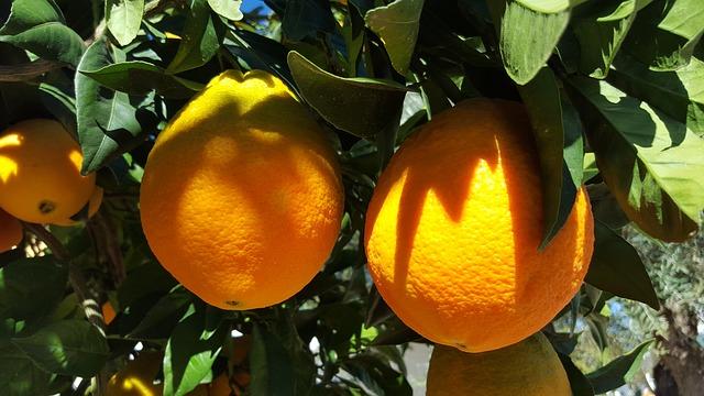 oranges-1199773_640