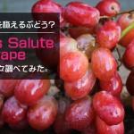 歯ごたえのある甘い果肉が特徴のぶどう Jack's Salute Grape について調べてみた