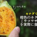 カナダで発見!果肉が橙色のカクタスペア(ウツワサボテン)が美しすぎる件