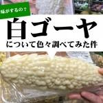 台湾産の白ゴーヤ(白苦瓜)を実際食べてみた感想まとめ!緑品種との味の違いは?