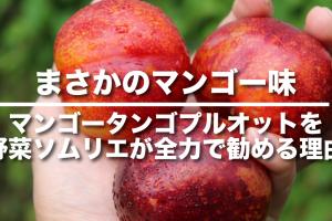 mangotangp