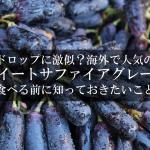 海外で人気のぶどう「スイートサファイアグレープ(Sweet Sapphire)」を食べる前に知っておきたいこと