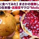 まさかの種無し柘榴?スペインの在来種・高糖度ザクロ「Mollar」に感動