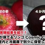長期間鮮度が保てるリンゴ Cosmic Crisp を124日間室内と冷蔵庫で別々に保管してみた結果