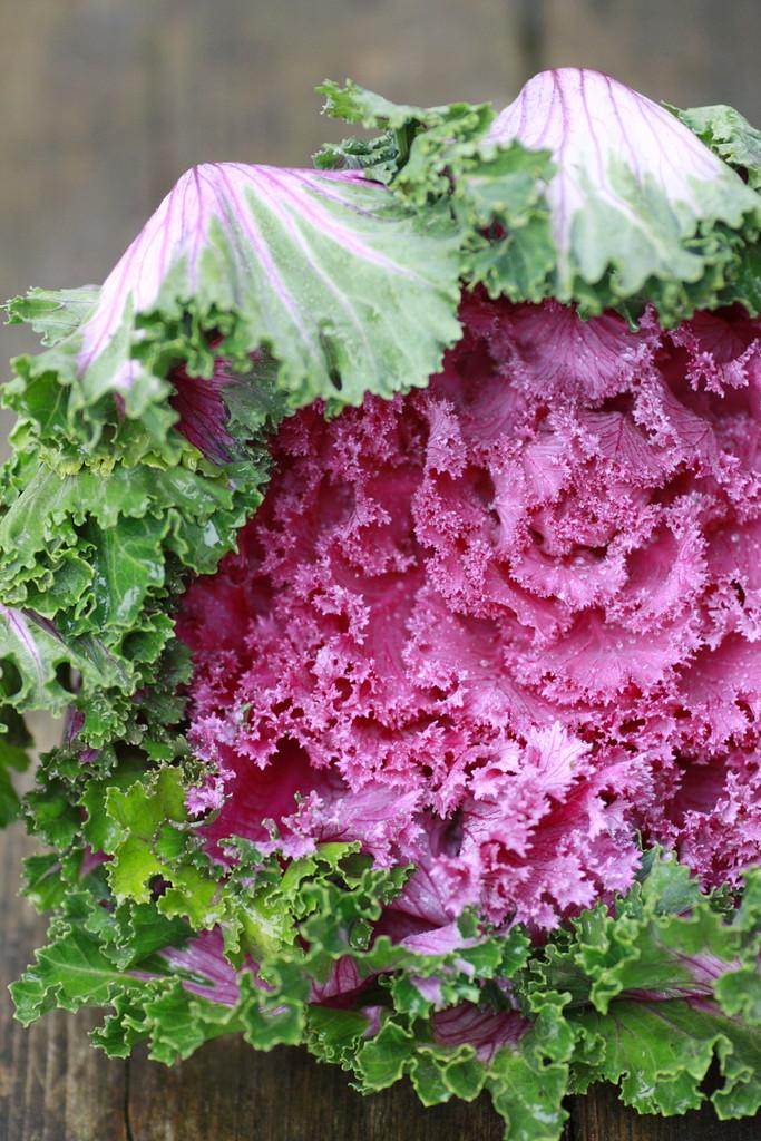 floweringkale1208no1