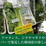 西洋フキやセリetc.!カナダのスーパーで発見した韓国産の珍しい春野菜11種類