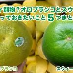同じ柑橘?オロブランコとスウィーティーについて知っておきたいこと5つまとめ