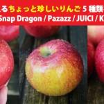 北米で手に入るちょっと珍しいりんご5種類を食べてみた(Sweetie / Snap Dragon / Pazazz / JUICI / Koru Apple)