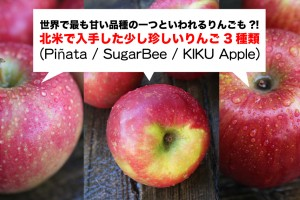 apples-pinata-sugarbee-kiku