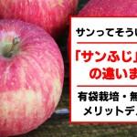 サンふじとふじリンゴの違いまとめ!有袋・無袋栽培のメリットデメリットは?