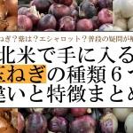これで解決!アメリカやカナダなど北米で手に入る玉ねぎの種類6つの違いと特徴まとめ