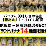 banana-brand14