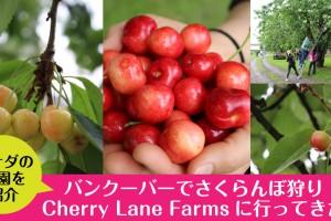 cherrylanefarms