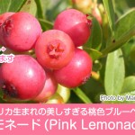pink-lemonada-thum