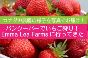 strawberry-picking-emma-lea-farms