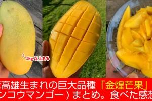 kinko-mango