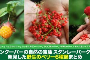 wildberries-at-stanley-park