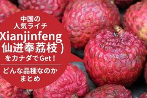 xianjinfeng-lychee