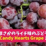 ライチの味がするぶどう?キャンディーハーツ(Candy Hearts Grape)まとめ