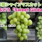 北米版シャインマスカット?ブランドぶどう「スイートグローブ(Sweet Globe Grape)」まとめ
