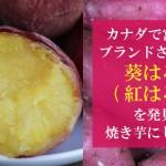 カナダで宮崎県産ブランドさつまいも「葵はるか(紅はるか)」を発見!焼き芋にしてみた