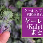 ケール×芽キャベツの英国野菜「ケーレッツ(Kalettes)」まとめ。プチヴェールとの違いは?
