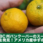 カナダBC州バンクーバーのスーパーで生のゆずを発見!アメリカ産 Yuzu Lemonの香りは?