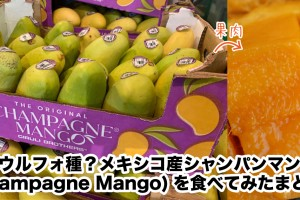 champagnemango-matome