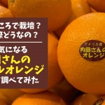 uchidasan-navel-orange