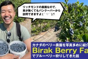 birakberryfarm-blueberrypicking