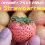 rosestrawberry-matome