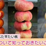 bantou-donut-peach